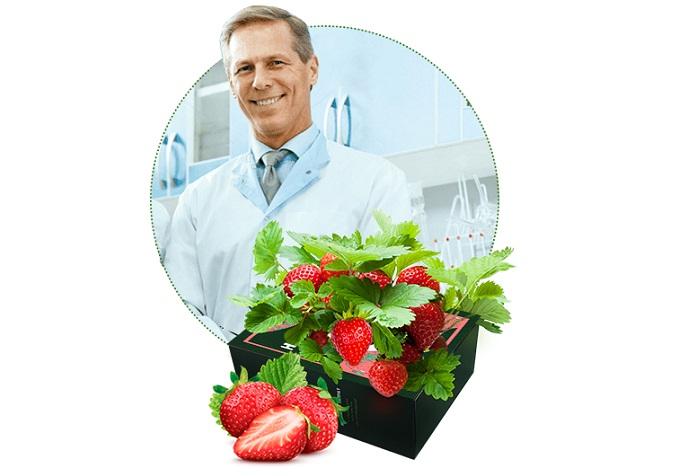 Home Berry Box căpșuni de casă: incredibila recoltă de căpșuni delicioase și mari DEJA PESTE O LUNĂ!